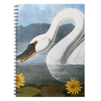 Audubon : Cygne commun Carnet