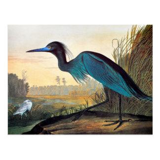 Audubon : Héron de petit bleu Carte Postale