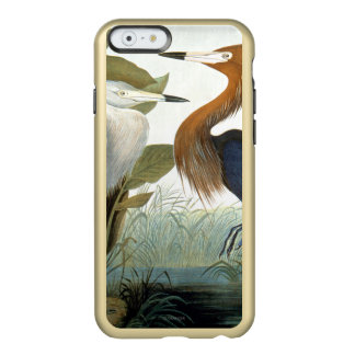 Audubon : Héron rougeâtre ou héron pourpre Coque iPhone 6 Incipio Feather® Shine