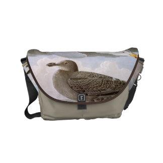 Audubon : Mouette d'harengs Besaces
