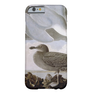 Audubon : Mouette d'harengs Coque iPhone 6 Barely There