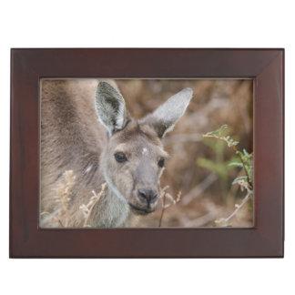 Australie occidentale, Perth, parc national de Boîtes À Souvenirs