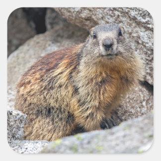 Autocollant alpin de Marmot
