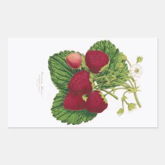 Autocollant antique d'impression de fraise