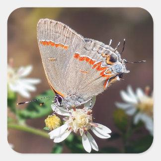 Autocollant bleu sombre de papillon de Hairstreak