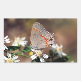 Autocollant bleu sombre de rectangle de papillon