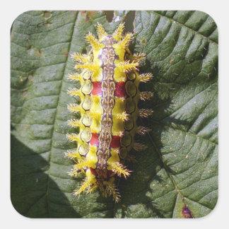 Autocollant carré de Caterpillar de chêne épineux