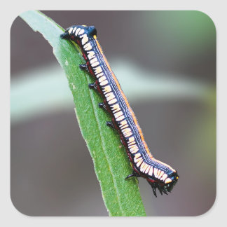 Autocollant carré de Caterpillar de jeune hibou