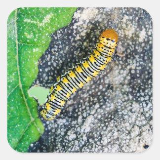 Autocollant carré de Caterpillar de mite d'or