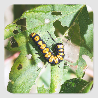 Autocollant carré de Caterpillar de palette