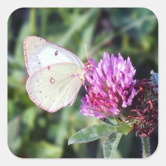 Autocollant commun de carré de papillon de soufre