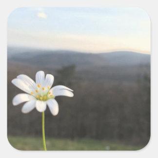Autocollant de carré de fleur blanche
