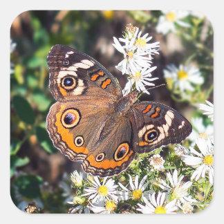 Autocollant de papillon de maronnier américain