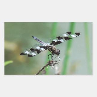 Autocollant de rectangle de libellule d'écumoire