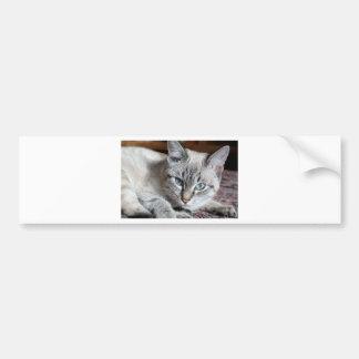 Autocollant De Voiture Animal familier de maquereau de Mieze de chaton de