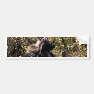 Autocollant De Voiture Babouin masculin de gelada (gelada de