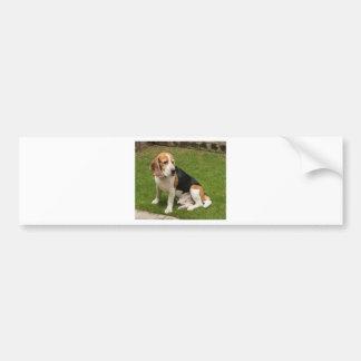 Autocollant De Voiture Beagle