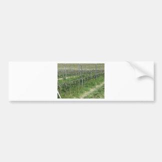 Autocollant De Voiture Champ nu de vignoble en hiver. La Toscane, Italie