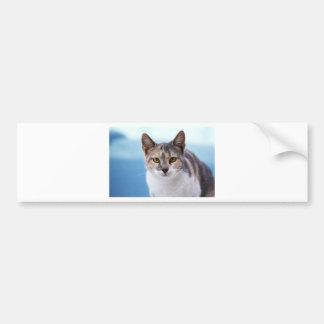 Autocollant De Voiture chat
