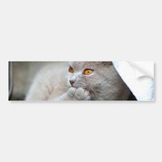 Autocollant De Voiture Chat britannique - chat drôle - chat gris