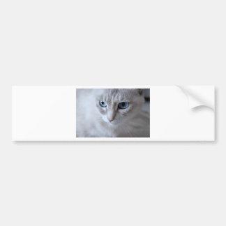 Autocollant De Voiture Chat de Kisa d'yeux bleus