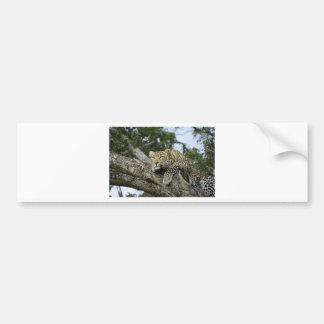 Autocollant De Voiture Chat sauvage animal de safari de l'Afrique d'arbre