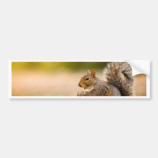 Autocollant De Voiture Écureuil affamé