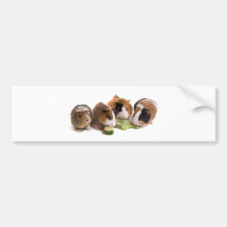 Autocollant De Voiture four guinea pigs who eat,