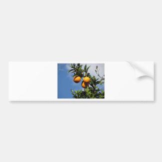 Autocollant De Voiture Fruits oranges accrochant sur l'arbre contre le