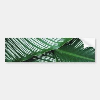 Autocollant De Voiture Le feuille tropical vert avec le blanc barre le