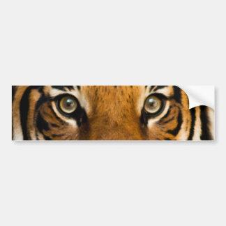 Autocollant De Voiture Le tigre sibérien observe l'adhésif pour