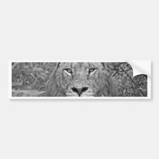 Autocollant De Voiture Lion de observation, Afrique du Sud