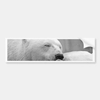 Autocollant De Voiture Ours blanc de repos