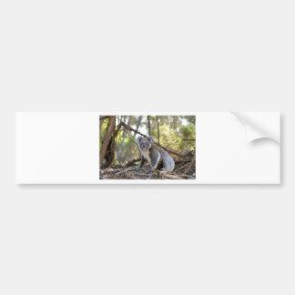Autocollant De Voiture Ours de koala gris et blanc