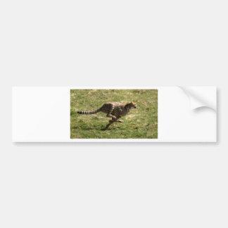 Autocollant De Voiture Plein galop de guépard (Acinonyx_jubatus)