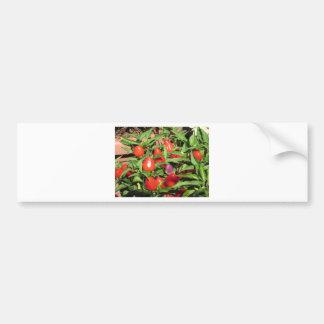 Autocollant De Voiture Poivrons de piment rouge accrochant sur le plante
