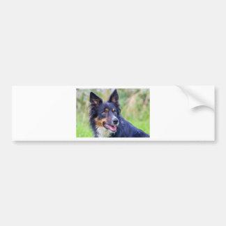 Autocollant De Voiture Portrait de border collie coloré dog.JPG