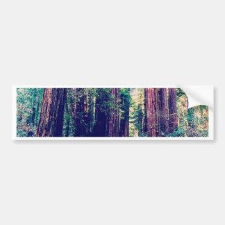 Autocollant De Voiture Séquoias de Californie