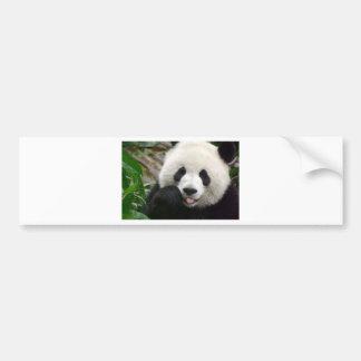 Autocollant De Voiture shy panda