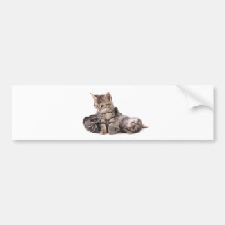 Autocollant De Voiture tabby kittens playing