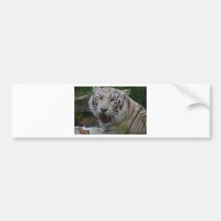 Autocollant De Voiture Tigre blanc