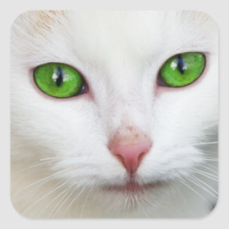 """Autocollant """"de yeux verts"""" de Kitty"""