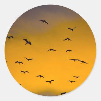 Autocollant d'oiseaux