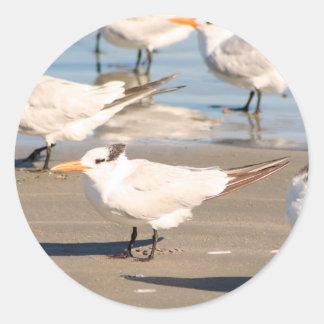 Autocollant d'oiseaux de plage