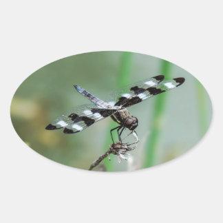 Autocollant d'ovale de libellule d'écumoire repéré