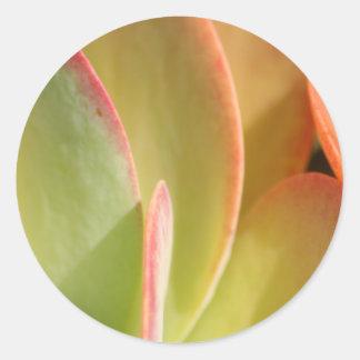 Autocollant du cactus 3 de coucher du soleil