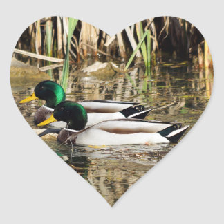 Autocollant en forme de coeur de canards de