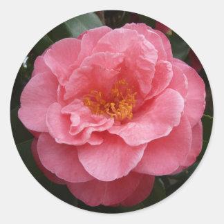 Autocollant floral de photo de camélia assez rose