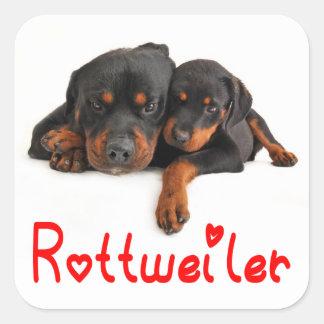 Autocollant/joint de chiot de rottweiler d'amour sticker carré