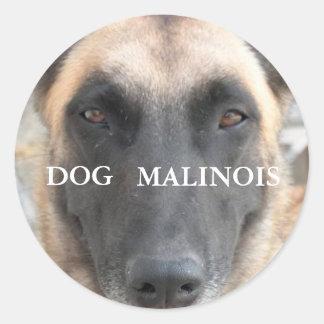 autocollant malinois